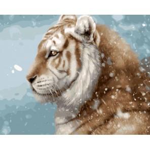 Снежный Раскраска картина по номерам акриловыми красками на холсте