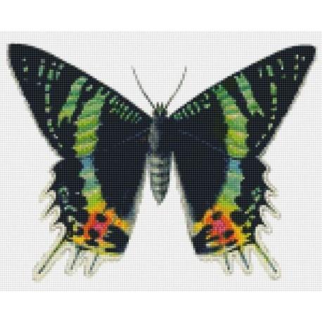 Бабочка Алмазная мозаика на подрамнике Цветной