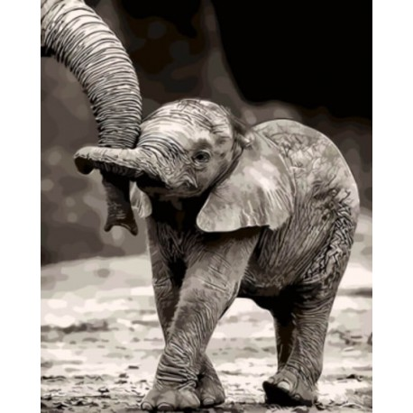 Раскраска по номерам Маленький слоненок картина 40х50 см ...
