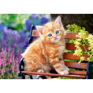 Котёнок на скамейке Пазлы Castorland