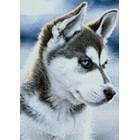 Выкладка алмазинками Снежный пес Алмазная мозаика (вышивка) Гранни