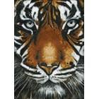Выкладка алмазинками Взгляд тигра Алмазная мозаика (вышивка) Гранни
