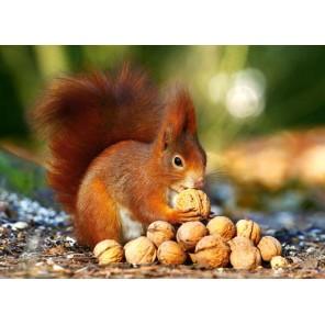 Белка с орешками Пазлы Castorland