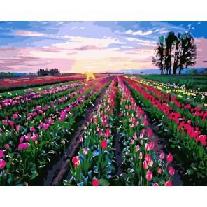 Поле тюльпанов Раскраска картина по номерам на холсте
