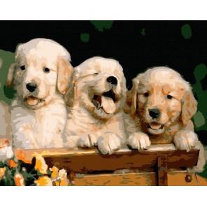 Три щенка Раскраска картина по номерам на холсте