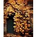Дверь в осенних цветах Раскраска картина по номерам на холсте