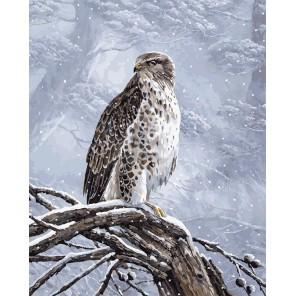 Степной орел Раскраска картина по номерам на холсте