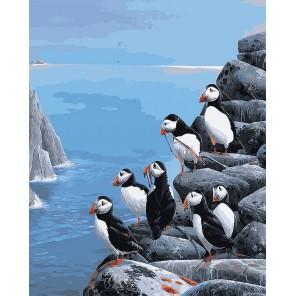Белогрудки Раскраска картина по номерам на холсте