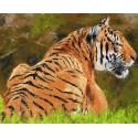 Тигр на поляне Раскраска картина по номерам на холсте
