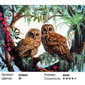Влюбленные совы Раскраска картина по номерам на холсте