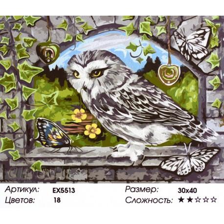 Сова и бабочки Раскраска картина по номерам акриловыми ...