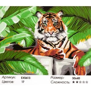 Количество цветов и сложность Зеленоглазый тигр Раскраска картина по номерам акриловыми красками на холсте