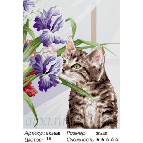 Котенок с ирисами Раскраска картина по номерам акриловыми красками на холсте