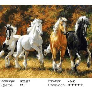 Количество красок и сложность Дикие и свободные Раскраска картина по номерам акриловыми красками на холсте