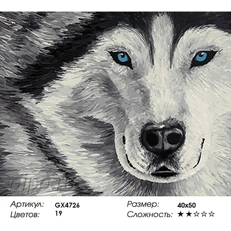 Раскраска по номерам Голубоглазый хаски картина 40х50 см ...