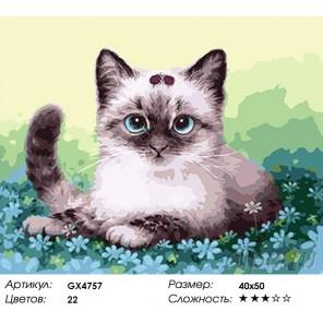 Котенок в незабудках Раскраска картина по номерам на холсте