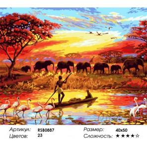 Джунгли Раскраска картина по номерам на холсте