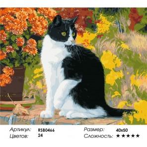 Количество цветов и сложность Черно-белый кот Раскраска картина по номерам акриловыми красками на холсте