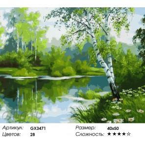 Березовый край Раскраска картина по номерам акриловыми красками на холсте