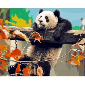 Лазающая панда Раскраска картина по номерам на холсте