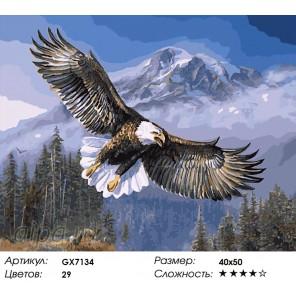 Количество цветов и сложность Полет белоголового орлана Раскраска картина по номерам акриловыми красками на холсте