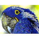 Попугай Набор для частичной вышивки бисером Вышиваем бисером