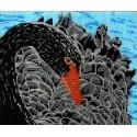 Черный лебедь Набор для частичной вышивки бисером Вышиваем бисером