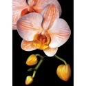 Изящная орхидея Алмазная вышивка мозаика Гранни