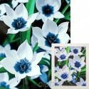 Собранная мозаика Синеглазые тюльпаны Алмазная вышивка мозаика Гранни