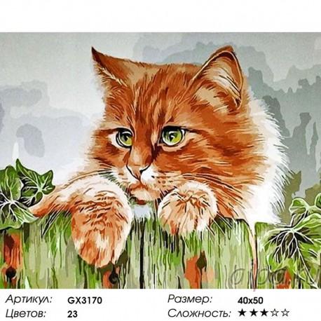 Сложность и количество цветов Кот на заборе Раскраска картина по номерам акриловыми красками на холсте