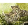 Семья леопардов Раскраска картина по номерам акриловыми красками на холсте