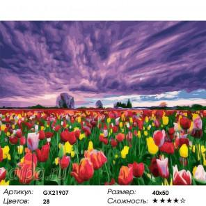 Цветение тюльпанов Раскраска картина по номерам на холсте