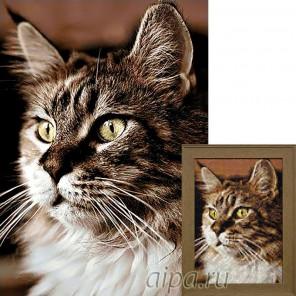 Домашний кот Алмазная вышивка мозаика Гранни