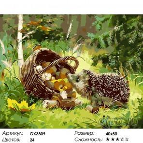Количество цветов и сложность Любопытный ежик Раскраска картина по номерам акриловыми красками на холсте