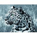 Леопард с изумрудными глазами Алмазная мозаика на подрамнике