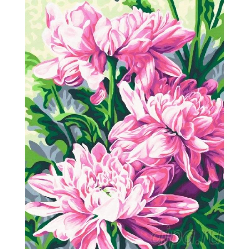 Раскраска по номерам Крупные хризантемы картина 40х50 см ...