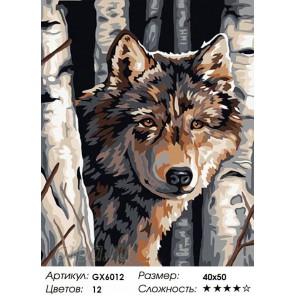 Волк среди берез Раскраска картина по номерам на холсте