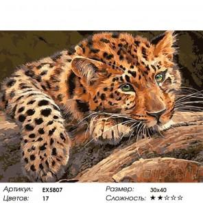 Количество цветов и сложность Мечтательный леопард Раскраска картина по номерам на холсте