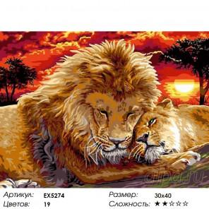 Львиная нежность Раскраска картина по номерам на холсте
