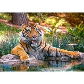 Тигр у воды Пазлы Castorland