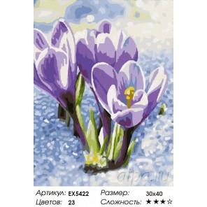 Весенние крокусы Раскраска картина по номерам на холсте