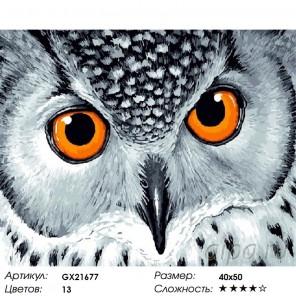 Количество цветов и сложность Взгляд совы Раскраска картина по номерам на холсте