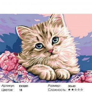Количество цветов и сложность Голубоглазый котенок Раскраска картина по номерам на холсте