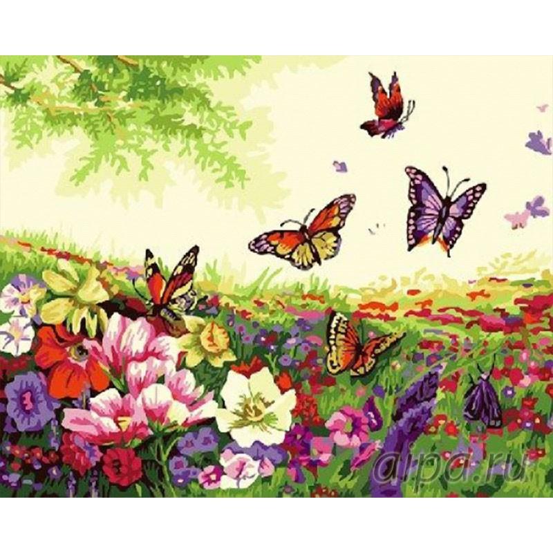 Раскраска по номерам Бабочки на лугу картина 40х30 см на ...