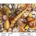 Ракушки Раскраска картина по номерам на холсте