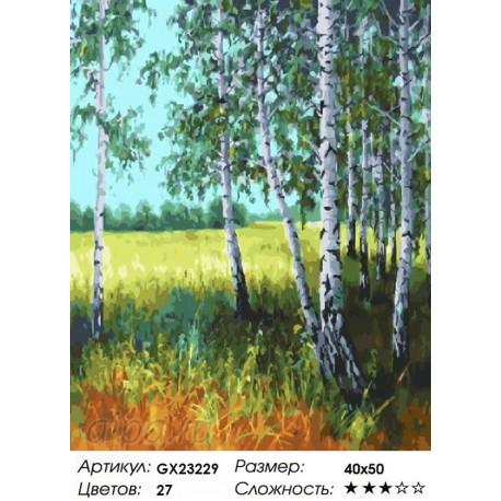 Летний день в березовом лесу Раскраска картина по номерам на холсте   картина 40х50 см на холсте Paintboy купить в интернет магазине GX23229 в Москве и СПб, фото, цена, отзывы