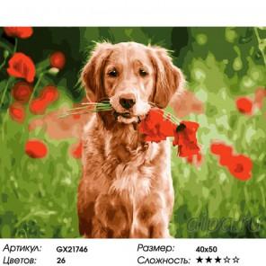 Цветы от друга Раскраска картина по номерам на холсте