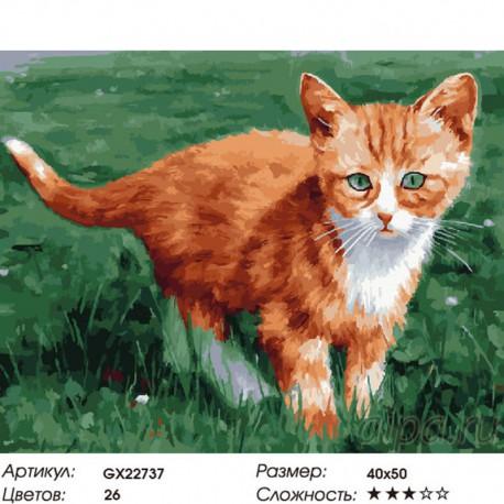 Количество цветов и сложность Рыжий котенок Раскраска картина по номерам на холсте
