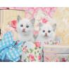 Белые котята Раскраска картина по номерам на холсте