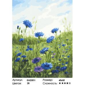 Количество цветов и сложность Полевые васильки Раскраска картина по номерам на холсте